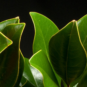Green Plants by Starbright NYC.jpg